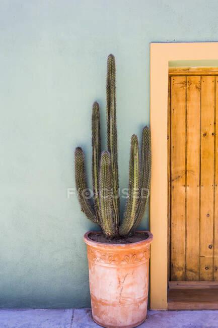 Grand cactus dans un pot sur une terrasse — Photo de stock