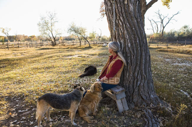 Mature woman at home on her property in a rural setting sitting under a tree, with three docs — Stock Photo