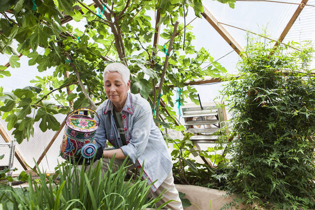 Smiling senior woman gardening in a geodesic dome, climate controlled glass house — Stock Photo