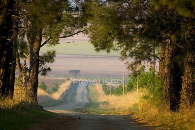 Vue le long de la route de campagne à travers les terres agricoles à Drakensberg, Afrique du Sud. — Photo de stock