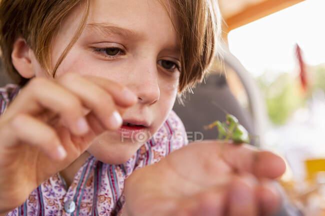 Seven year old boy holding a praying mantis — Stock Photo