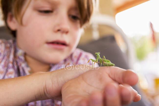 Семь лет мальчик держит богомола — стоковое фото