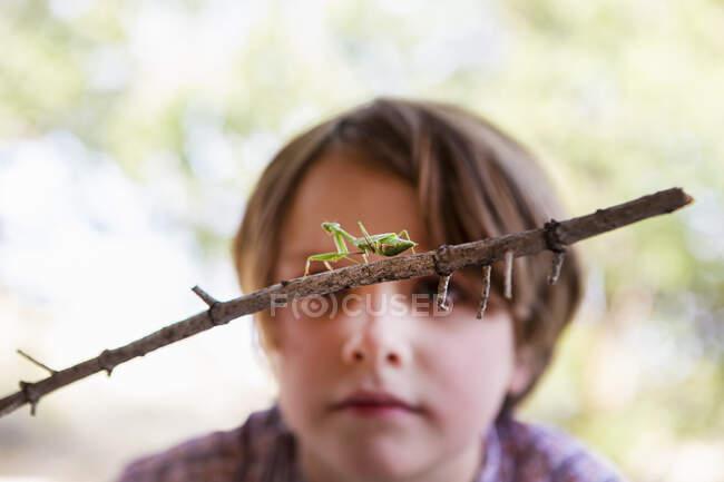 7-летний мальчик смотрит на богомола — стоковое фото