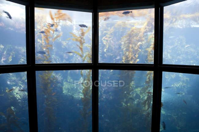 Через вікно акваріума, підводну воду, рибу та рослини. — стокове фото