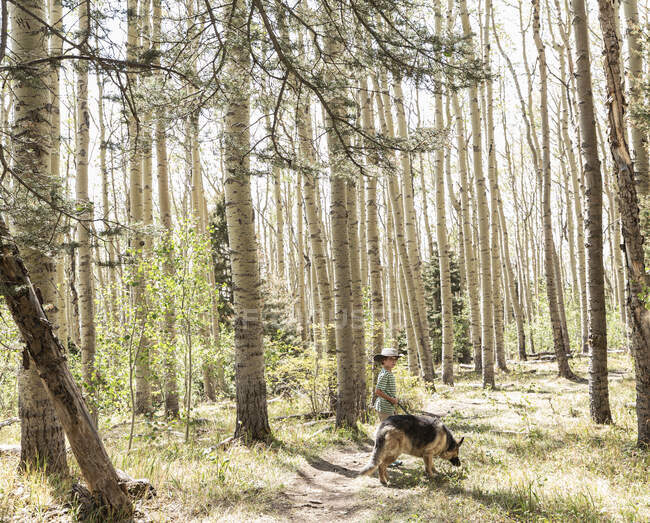 Seven year old boy walking his dog in forest of Aspen trees — Stock Photo