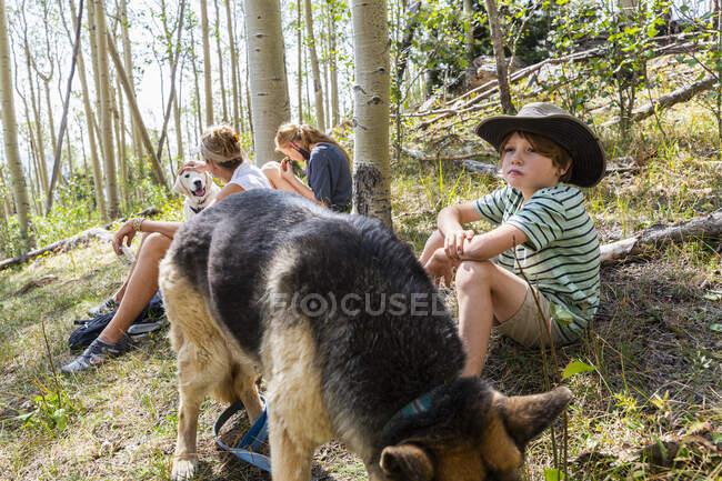 Семья отдыхает в лесу Аспенских деревьев — стоковое фото