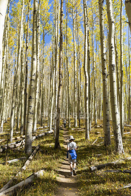 Young boy walking on autumn aspen nature trail — Stock Photo