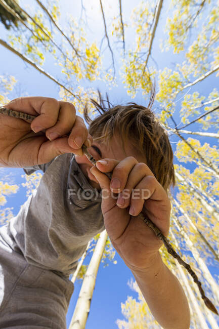 Low angle view at young boy wearing COVID mask with autumn aspens above — Stock Photo