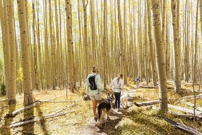 Mother and daughter walking their dogs on autumn aspen nature trail — Stock Photo