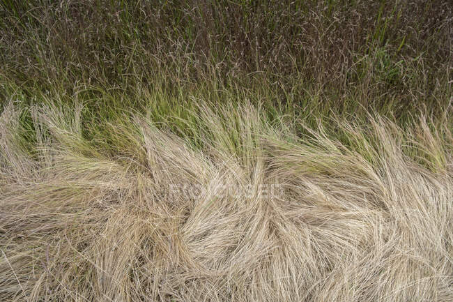 Field of dry summer grass, close-up view — Stock Photo