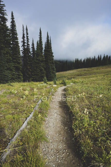 Vue du sentier Pacific Crest à travers une prairie alpine éloignée, automne — Photo de stock
