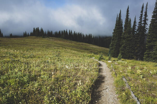 View of the Pacific Crest Trail path in remote alpine meadow, autumn — Stock Photo