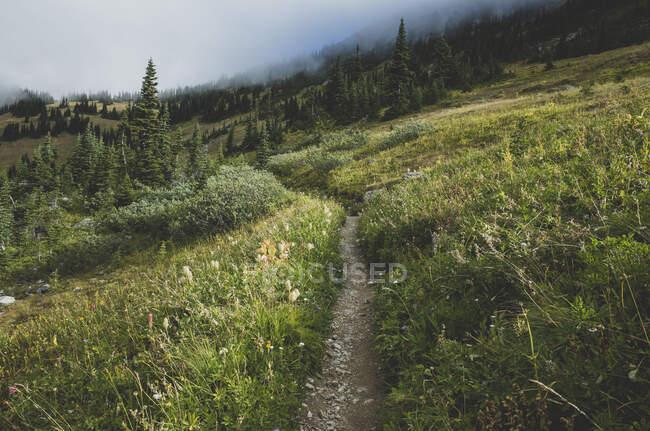 Vue du sentier Pacific Crest à travers une prairie alpine éloignée — Photo de stock