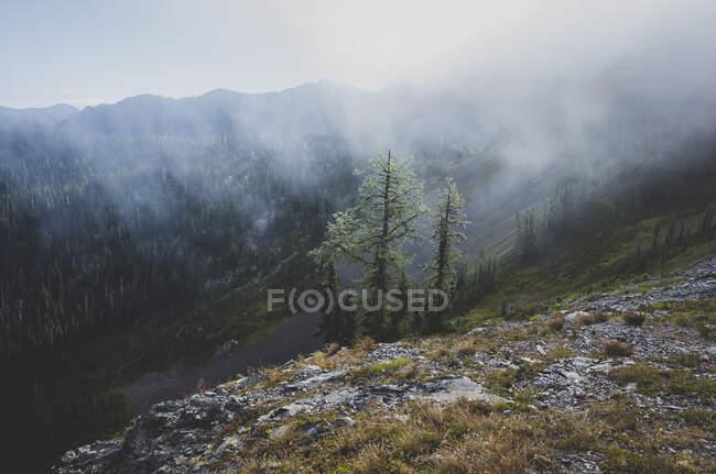 Грозовые тучи поднимаются над отдаленным горным хребтом и долиной, вдоль Тихоокеанского гребня — стоковое фото