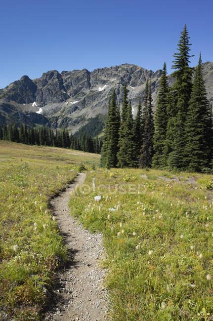 Альпийские луга Тихоокеанского гребня — стоковое фото