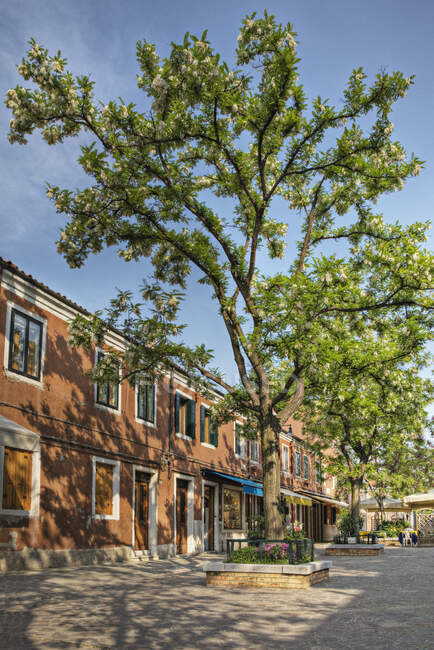 Row of stores and trees on street. — Stock Photo