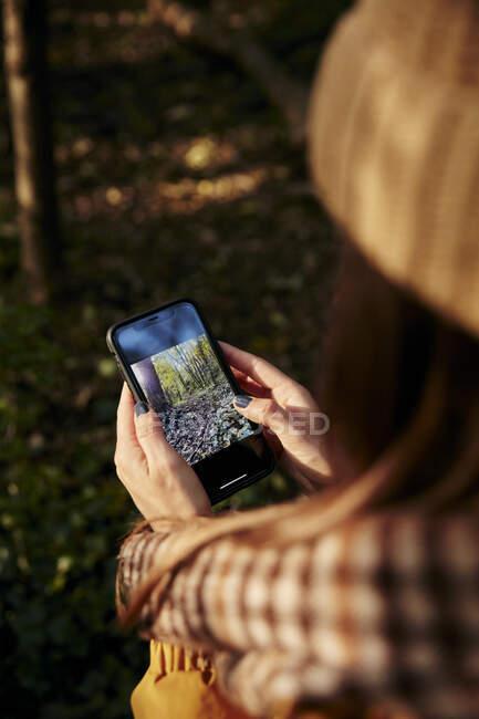 Femme debout dans les bois regardant la photographie des arbres sur le téléphone intelligent — Photo de stock