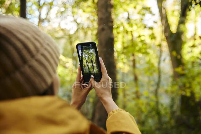 Женщина держит смартфон, чтобы сфотографировать деревья в лесу — стоковое фото