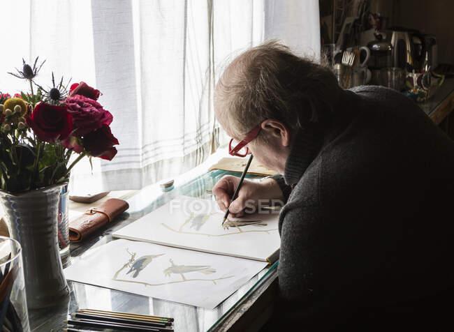 Artista madura no trabalho desenhando sobre papel, um estudo de vida selvagem de pássaros. — Fotografia de Stock