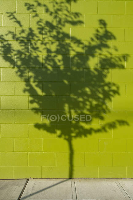 Tree shadow on a building wall — Stock Photo
