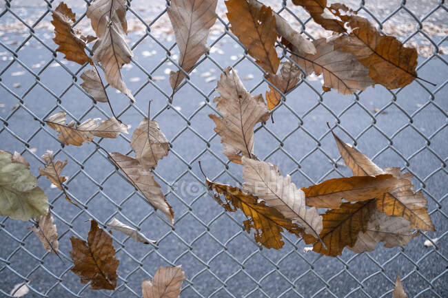 Autumn leaves caught in chainlink fence — Stock Photo