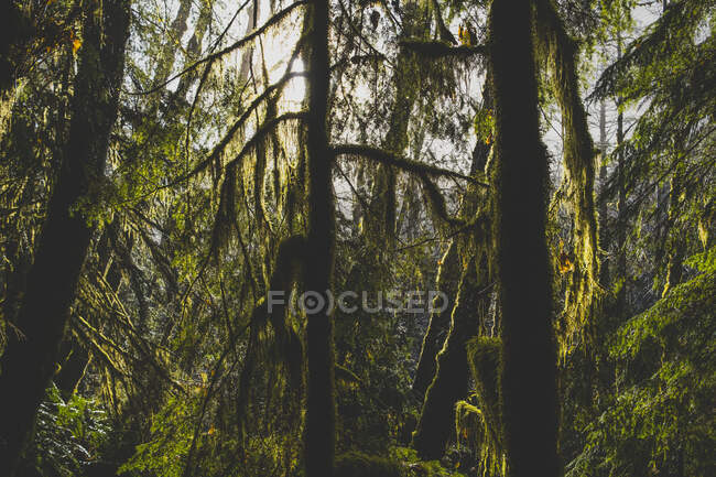 Woodland trees covered in mist — Stock Photo
