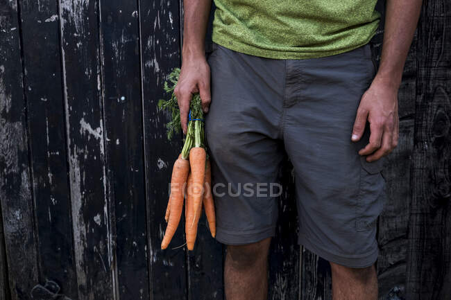 Close up of person holding bunch of freshly picked carrots. — Stock Photo
