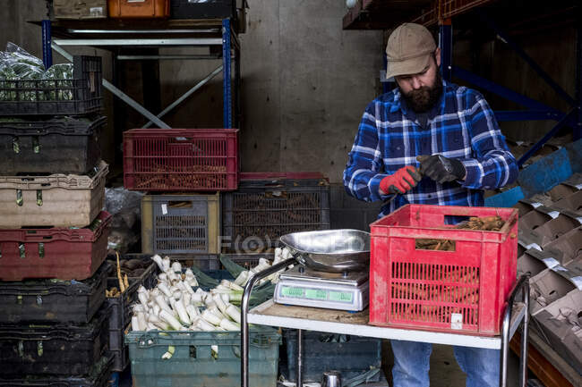 Farmer in a barn weighing and packing leeks and root vegetables. — Stock Photo