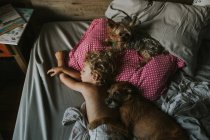 Boy sleeping with dogs in bed — Stock Photo