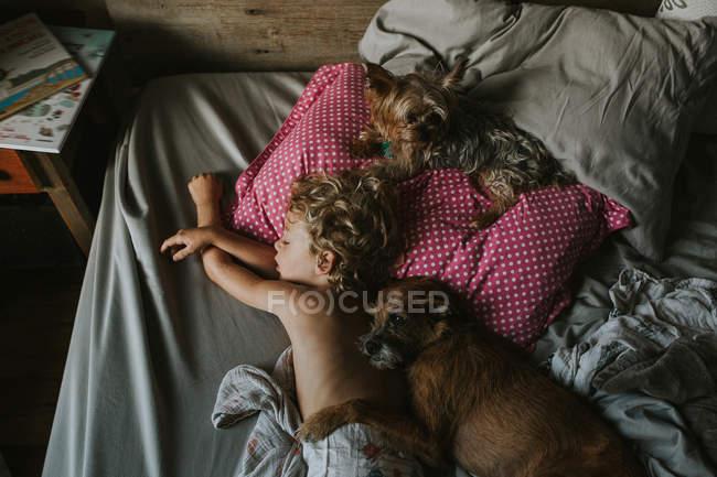 Junge schläft mit Hunden im Bett — Stockfoto