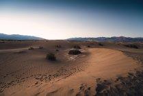 Мескит – плоские дюны — стоковое фото