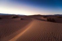 Dunas de areia plana de algaroba — Fotografia de Stock