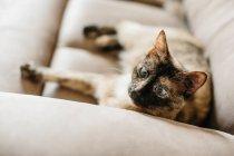 Милая кошечка на диване — стоковое фото