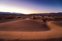 Mesquite flache Sanddünen — Stockfoto