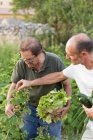 Men holding harvest of vegetables in hands and inspecting raspberry — Stock Photo