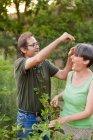 Coppie mature che hanno divertimento durante l'ispezione cespugli di lamponi — Foto stock