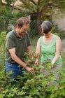 Пара пожилых людей старшего возраста заботятся о малине и улыбаются в саду — стоковое фото