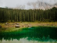 Landschaft mit immergrünen Bäumen — Stockfoto