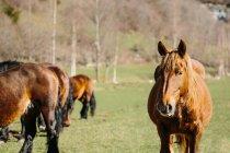 Коней, стоячи в лузі — стокове фото