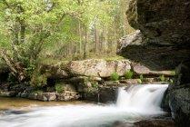 Cascata di misteri nascosti nella foresta — Foto stock