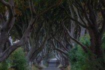 Bordes oscuros, Ballymoney, Irlanda del norte - foto de stock