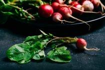 Ravanello con foglie su oscurità — Foto stock