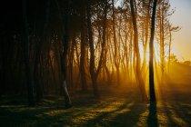 Sunset light trhough woods on idyllic lawn — Stock Photo