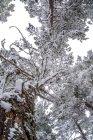 Paisaje nevado de Madrid - foto de stock