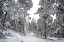 Snowy landscape of Madrid — Stock Photo