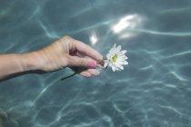 Main femelle tenant fleur de camomille sur l'eau — Photo de stock