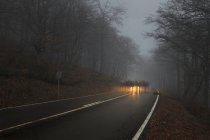 Foggy forest road — Stock Photo