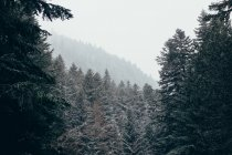 Serene winter forest in daytime — Stock Photo
