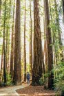 Homme debout près des séquoias — Photo de stock