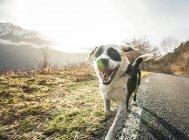 Собака бегает по проселочной дороге — стоковое фото
